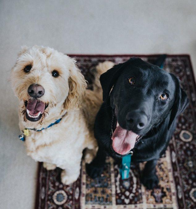 hvac-pet-owner-tips
